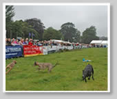 Irish Game Fair